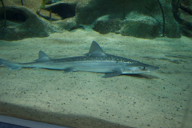 New Zealand National Aquarium: Learning about land and sea ...
