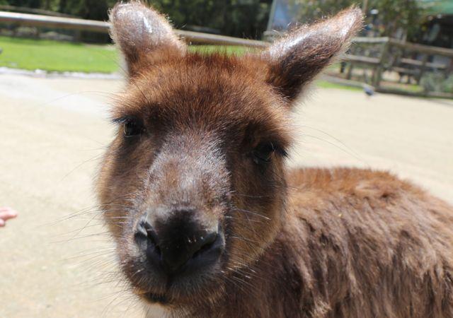Ballarat Wildlife Park